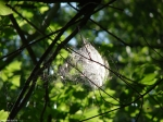 Hot Springs Mountain Trail Spider Web