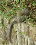 Hot Springs National Park, Arkansas Promenade Squirrel