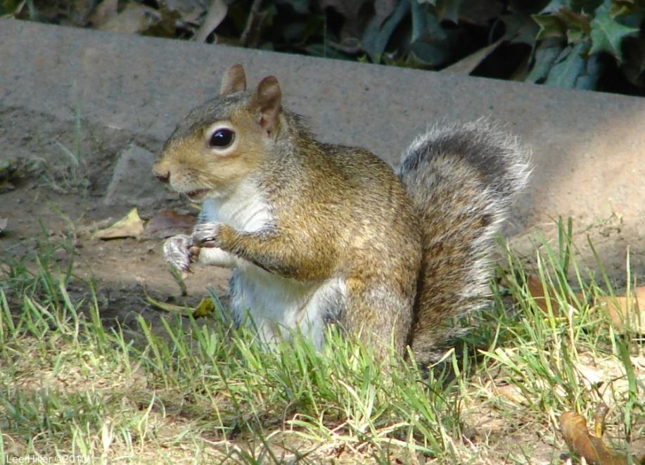 Hot Springs National Park, AR Entrance Squirrel