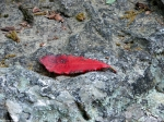 Hot Springs National Park, AR Peak Trail Red Leaf