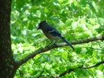 Hot Springs Mountain Trail Five Line Blue Jay