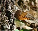 Lower Dogwood Trail Orange Butterfly