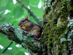 Hot Springs National Park Tufa Terrace Chipmunk In Tree