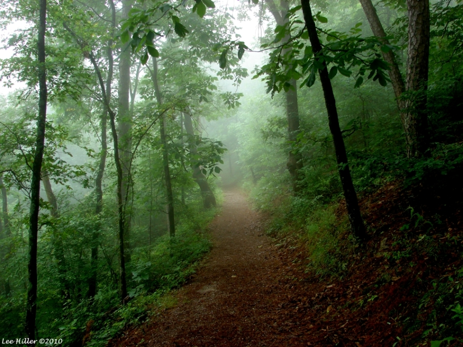 Hot Springs National Park Short Cut Trail Fog