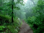 Hot Springs National Park Short Cut Trail Fog