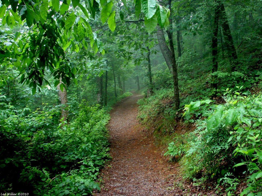 Hit The Trails In Hot Springs National Park All Year Round
