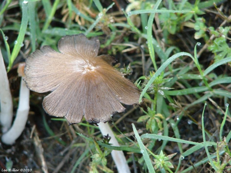 Tufa Terrace Fungi
