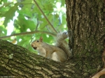 Promnade Squirrel
