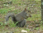 Hot Springs Mountain Trail Picnic Area Squirrel