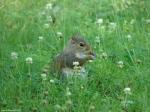 Fountain Trail Squirrel