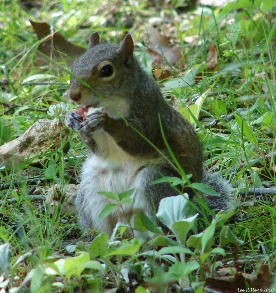 Fountain Trail Squirrel Mom