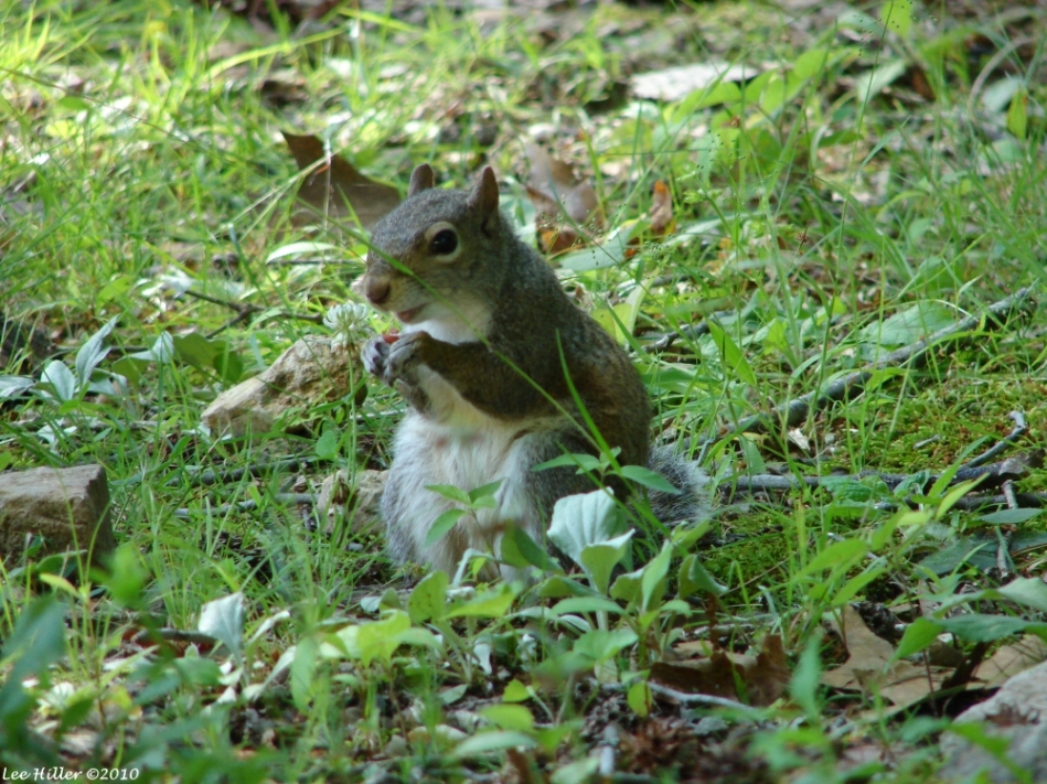 Fountain Trail Squirrel Mom