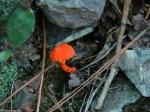 Lower Dogwood Trail Fungus