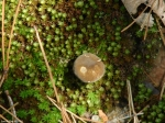 Lower Dogwood Fungus Button