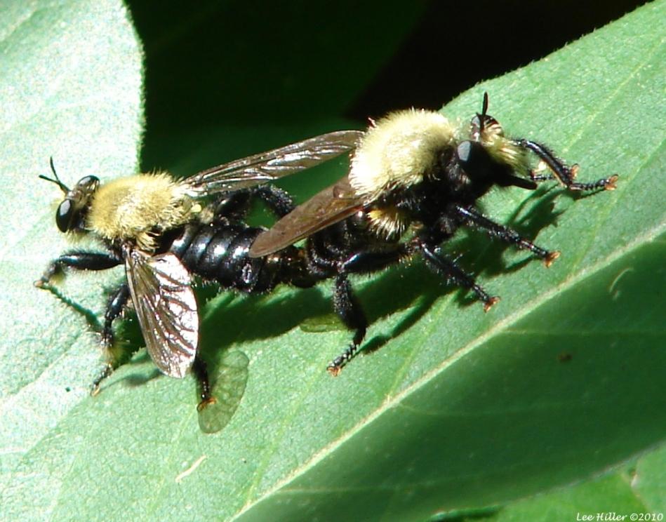 Lower Dogwood Trail Sackens Bee Hunter