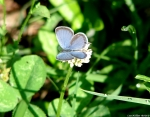 Floral Trail Summer Azure Butterfly