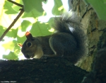 Hot Springs Mountain Picnic Area Squirrel