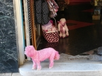 Where do Pink Poodles Shop? Central Ave Hot Springs