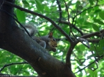 Lower Dogwood Trail Squirrel