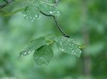Honeysuckle Trail Spring Rain