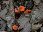 Hot Springs Mountain Trail Fungi