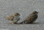 Entrance Sparrow Mom and Baby