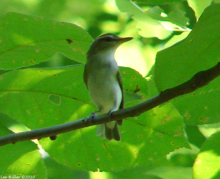 Hot Spring Mountain Trail Mystery Bird