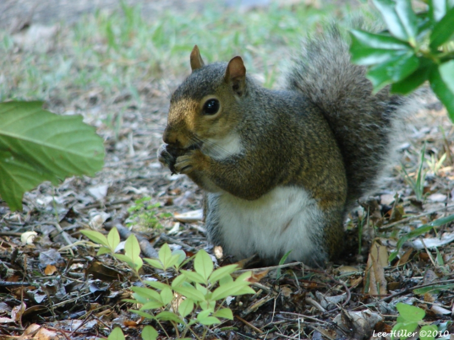 Tufa Terrace Squirrel