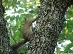 Tufa Terrace Squirrel Babies
