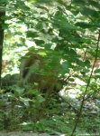 Hot Springs Mountain Trail Deer Doe