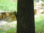 Peak Trail Squirrel