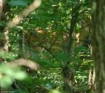 Dead Chief Trail Deer