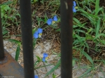 Carriage Road Blues Behind Bars