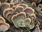 Upper Dogwood Trail Fungi Log