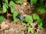 Hot Springs Mountain Trail Brown Turquoise Butterfly