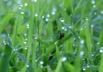 Tufa Terrace Droplets