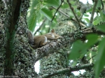 Tufa Terrace Baby Squirrel