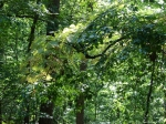 Lower Dogwood Trail