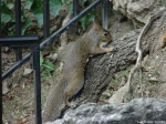 Hot Springs National Park, AR Promenade Squirrel