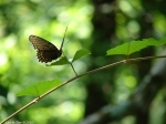 Hot Springs Mountain Trail Butterfly