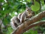 Floral Trail Squirrel