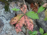 Hot Springs Mountain Trail Coral Leaf