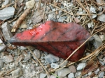 Hot Springs Mountain Trail Red Leaf