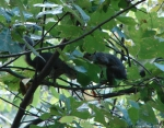 Hot Springs Mountain Trail Romantic Squirrels