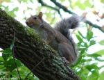 Carriage Road Squirrel