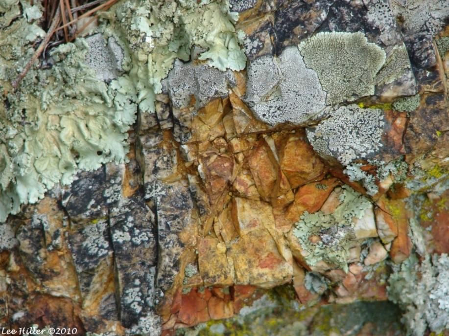 Goat Rock Trail Lichen Rock
