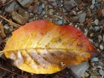 Hot Springs Mountain Trail Colorful Leaf