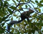 Tufa Terrace Squirrel
