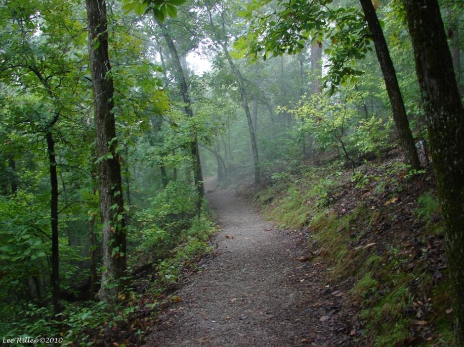 Hot Springs Mountain Trail Fog