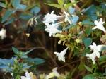 Arlington Lawn Hummingbird Moth